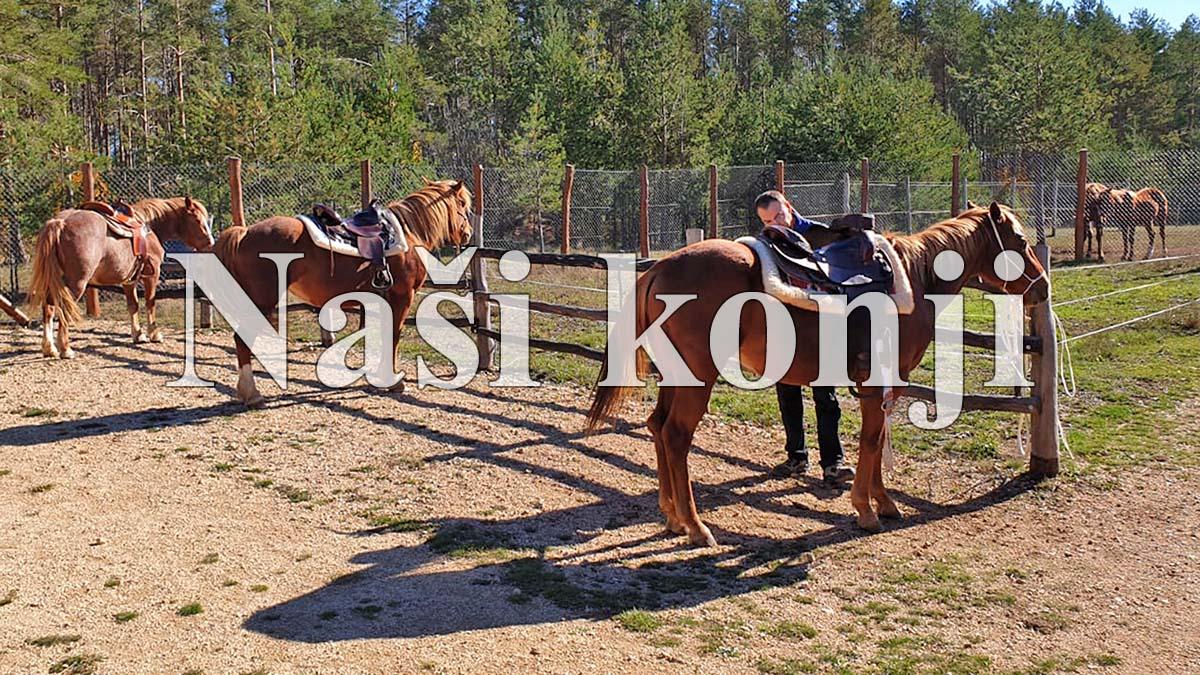 Naši konji